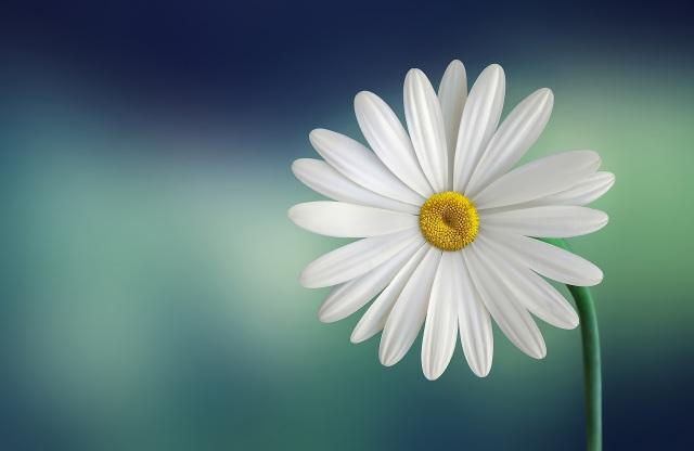 pexel flower